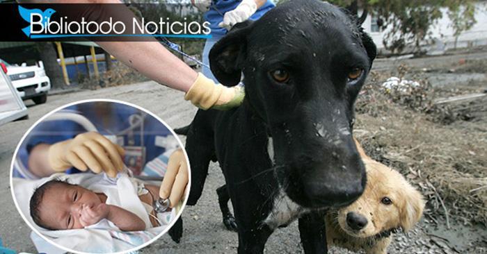 ¡Perro héroe! Encuentra a bebé recién nacido escondido en el lugar menos esperado