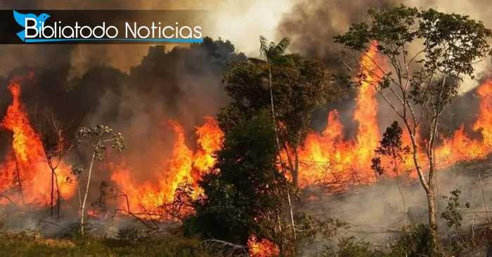Conoce las trágicas consecuencias que enfrenta la humanidad ante el voraz incendio en Amazonia