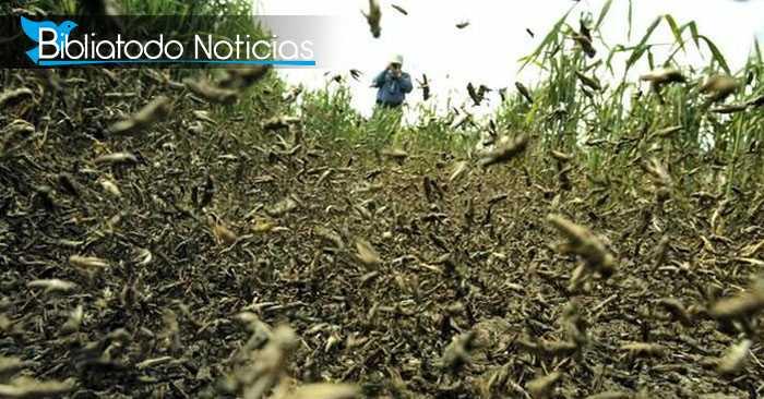 """Langostas """"apocalípticas"""" pueden desatar la peor hambruna en África tras destruir cosechas"""