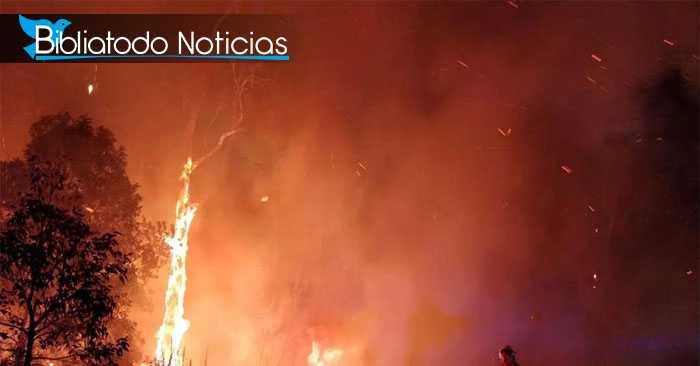 AUSTRALIA EN EMERGENCIA: Incendios incontrolables envuelven a los habitantes