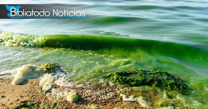 Lago contaminado, foto de referencia